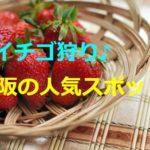 2020大阪「いちご狩り」食べ放題スポット!スイーツ無料も?予約や期間は?