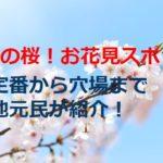 大阪の桜の名所やお花見スポット!アクセスは?地元民の穴場や定番も紹介!