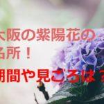 大阪の紫陽花(あじさい)の名所のおすすめ!期間や見ごろは?穴場は?